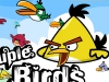 Angry Birds couple birds 2.4